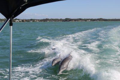 MustDo.com   Exploring Sarasota, Florida with a boat rental