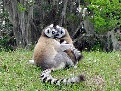 See a variety of animals at the Naples Zoo at Caribbean Gardens Naples, Florida