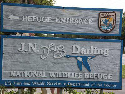"JN ""Ding"" Darling Wildlife Refuge Sanibel Island Must Do"