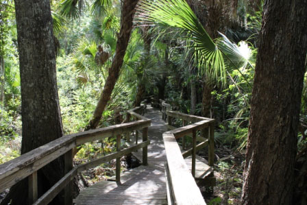Must Do Sarasota attractions Crowley Museum & Nature Center boardwalk