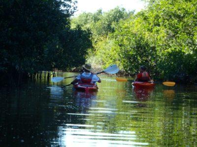 Must Do Naples top 10 activities Naples Kayak Company Rookery Bay guided kayak tour