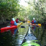 Must Do Naples activities Rookery Bay guided kayak tour Naples Kayak Company, Naples, Florida.