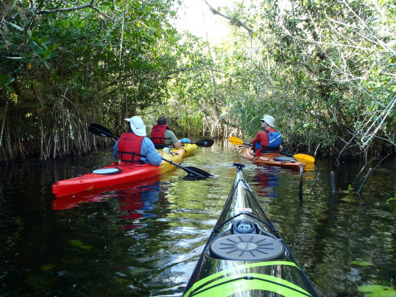 Must Do Naples Activities Rookery Bay Guided Kayak Tour Naples - The florida kayaking guide 10 must see spots for paddling