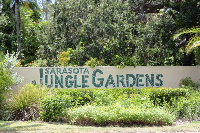 Sarasota Jungle Gardens The Areas Only Zoological Garden Must Do Visitor Guides