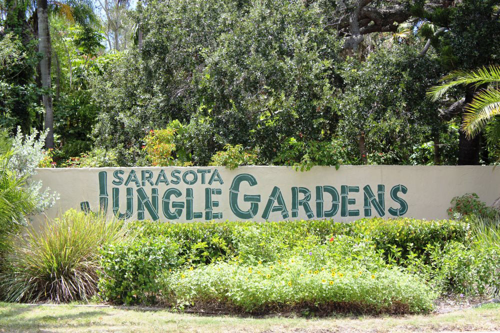 Sarasota Jungle Gardens in Sarasota features 10 acres of tropical vegetation, jungle trails, exotic birds, crocodiles and more.