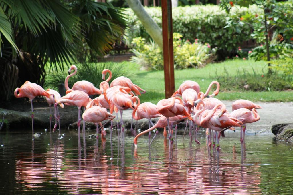 45 Photos Of Sarasota Florida Sun Sand And Relaxation Places Boomsbeat