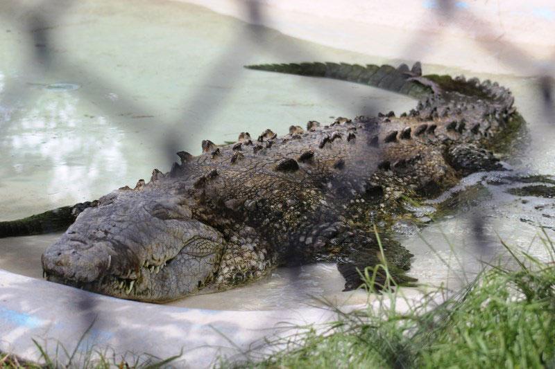Sarasota Jungle Gardens reptiles