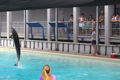 Dolphins perform at Mote Marina Aquarium Sarasota, Florida