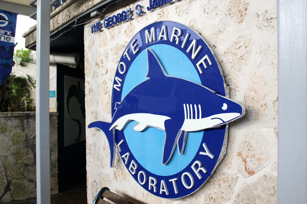 Mote Marine Aquarium A Cool Sarasota Family Attraction