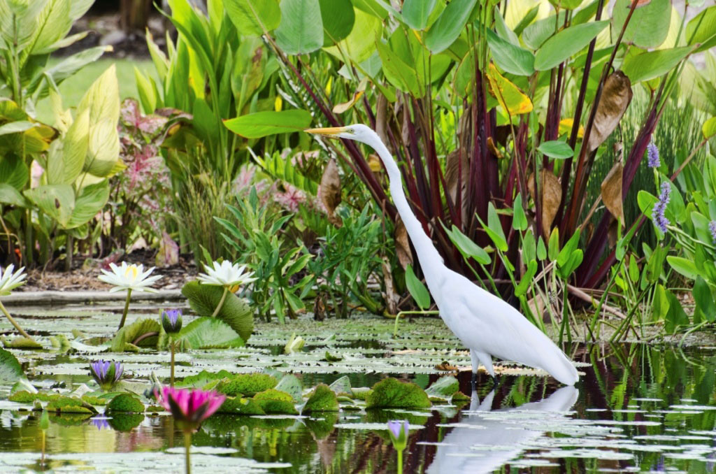 MustDo.com | White Ibis at the Naples Botanical Gardens in Naples, Florida. Photo courtesy Jennifer Brinkman