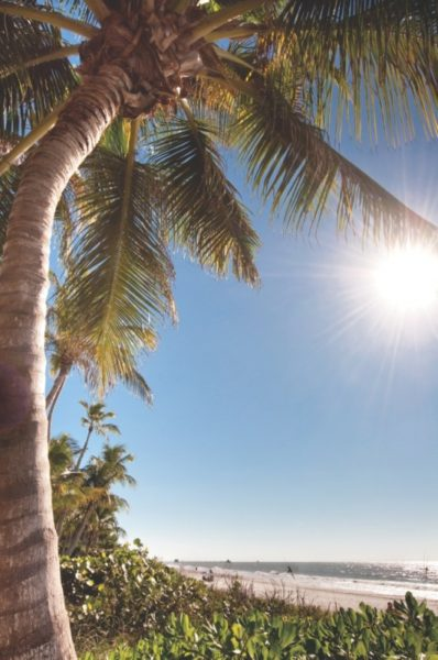 MustDo.com | Florida palm tree at the Beach.