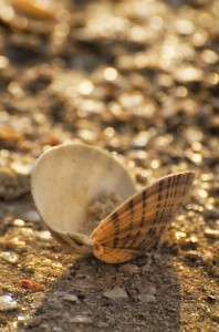MustDo.com | Shell on beach Naples, Florida beach scavenger hunt.