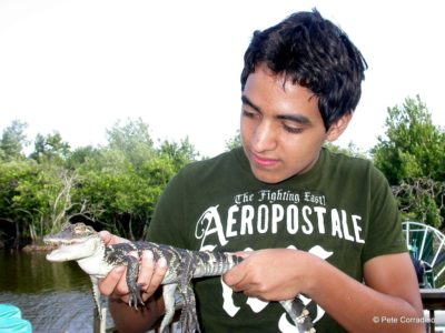 MustDo.com | Everglades Day Safari Captain Bob's Excellent Adventures boy holds a baby alligator.