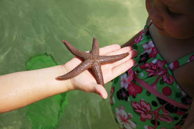 MustDo.com | Sea starfish found while on a shelling tour with Good Time Charters Fort Myers Beach, Florida.