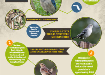 Sarasota Florida birds eye view point infographic