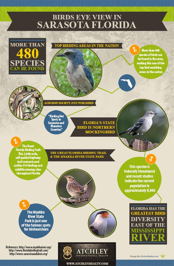 Sarasota Florida birds eye view point infographic