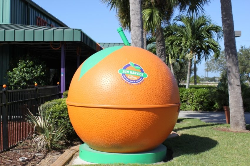 Add a Little Sunshine to your Day by Touring Sun Harvest Citrus in Fort Myers | Must Do Visitor Guides