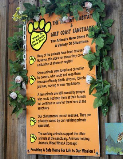 Big Cat Habitat and Gulf Coast Sanctuary Sarasota, Florida family fun attractions