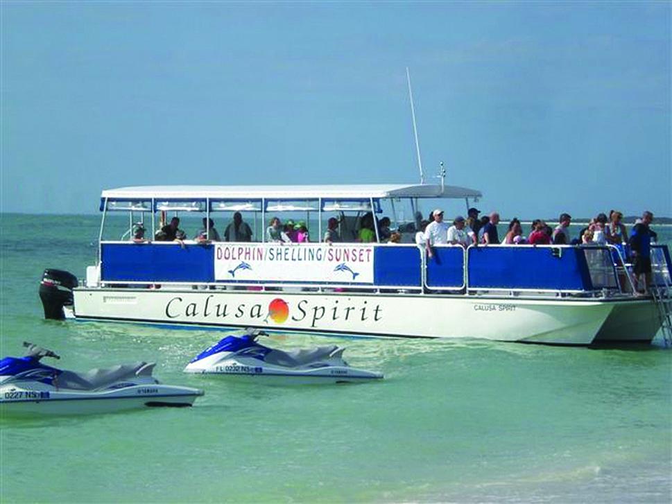 Marco Island Florida Dolphin Tours