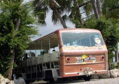 MustDo.com | Sarasota area attractions | Mixon Fruit Farms Orange Blossom tram offers daily tours of the grove Bradenton, FL