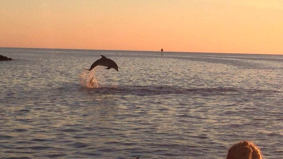 MustDo.com | Sarasota, Florida Must Do Visitor Guide | Siesta Key Watersports Sunset, dolphin, sightseeing and shelling tours.