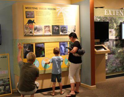 Clinic for Rehabilitation of Wildlife - CROW family-friendly interactive wildlife exhibit. Sanibel Island, Florida. Must Do Visitor Guides, MustDo.com