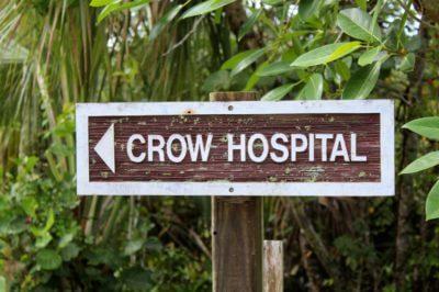 MustDo.com   Clinic for Rehabilitation of Wildlife (CROW) wildlife hospital Sanibel Island, Florida.