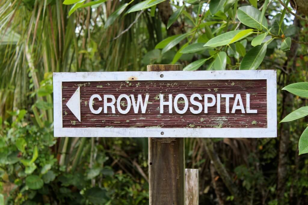 MustDo.com | Clinic for Rehabilitation of Wildlife (CROW) wildlife hospital Sanibel Island, Florida.