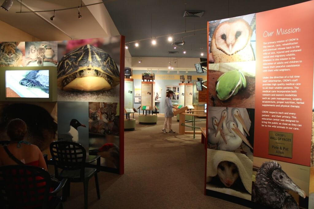 Clinic for Rehabilitation of Wildlife (CROW) visitor center exhibits Sanibel Island, Florida | Must Do Visitor Guides, MustDo.com