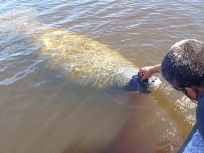 Must Do Visitor Guides | Manatee sighting Everglades Island Airboat tours Marco Island and Naples, Florida