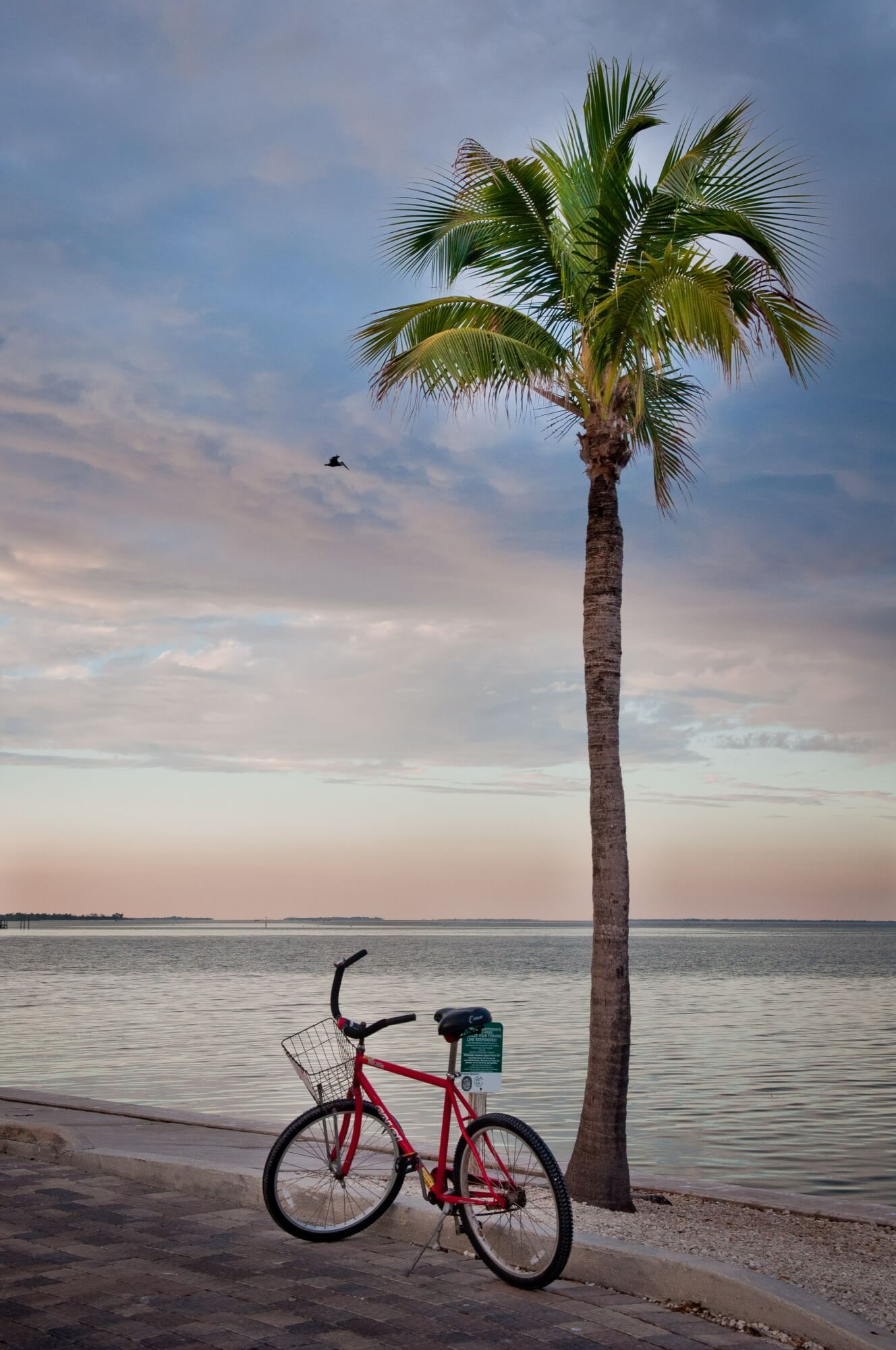 MustDo.com | Biking along Periwinkle Way on Sanibel Island, Florida. Photo by Debi Pittman WilkeyBicycle and palm tree at sunset, South Seas Island Resort, Captiva Island, Florida. Photo by Debi Pittman Wilkey