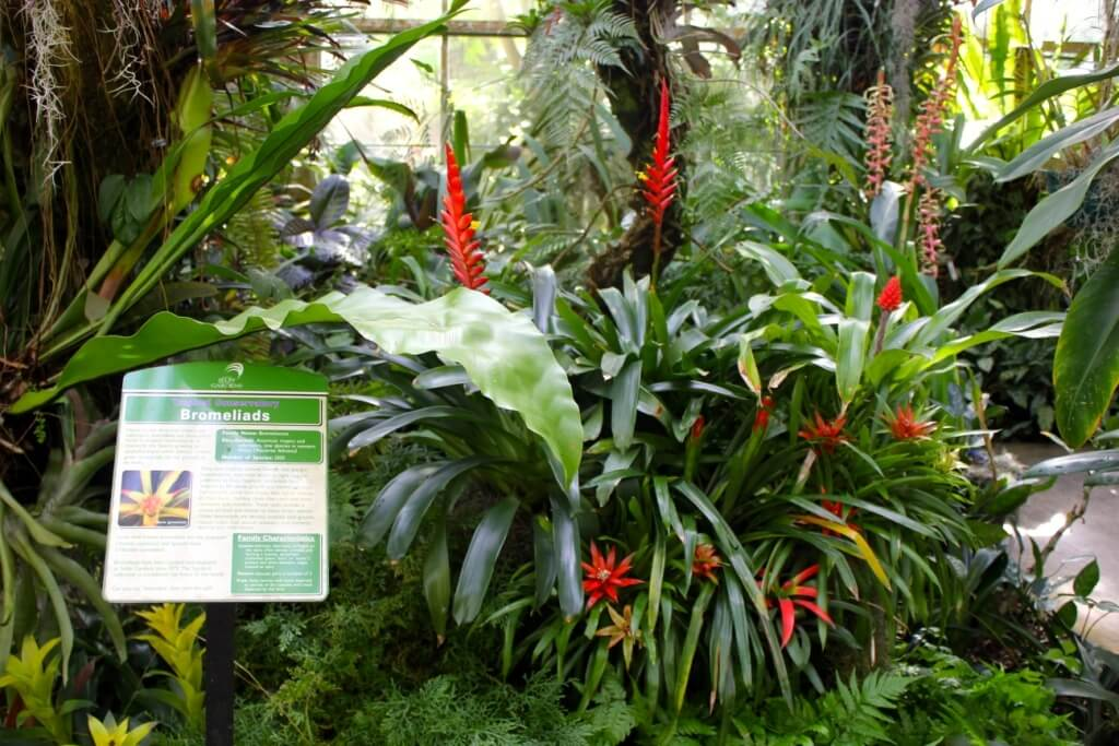 Gentil Bromeliad Display At Marie Selby Botanical Gardens Sarasota, FL