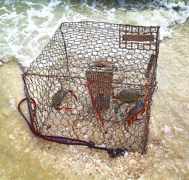 MustDo.com Crab trap seen on Captain Bubby's IsLAND Tour Sanibel Island, Florida.