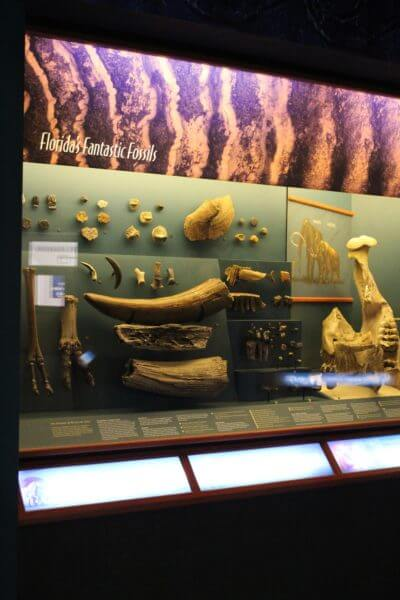 MustDo.com, Florida fossil exhibit South Florida Museum Bradenton, Florida. Must Do Visitor Guides.