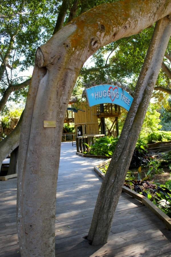 MustDo.com, Hugging Tree at the Children's Rainforest Garden Marie Selby Botanical Gardens Sarasota, Florida