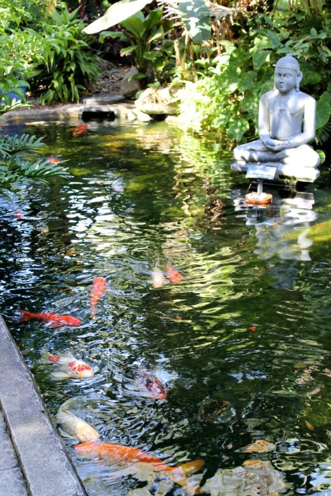 MustDo.com, Koi pond at Marie Selby Botanical Gardens Sarasota, Florida.