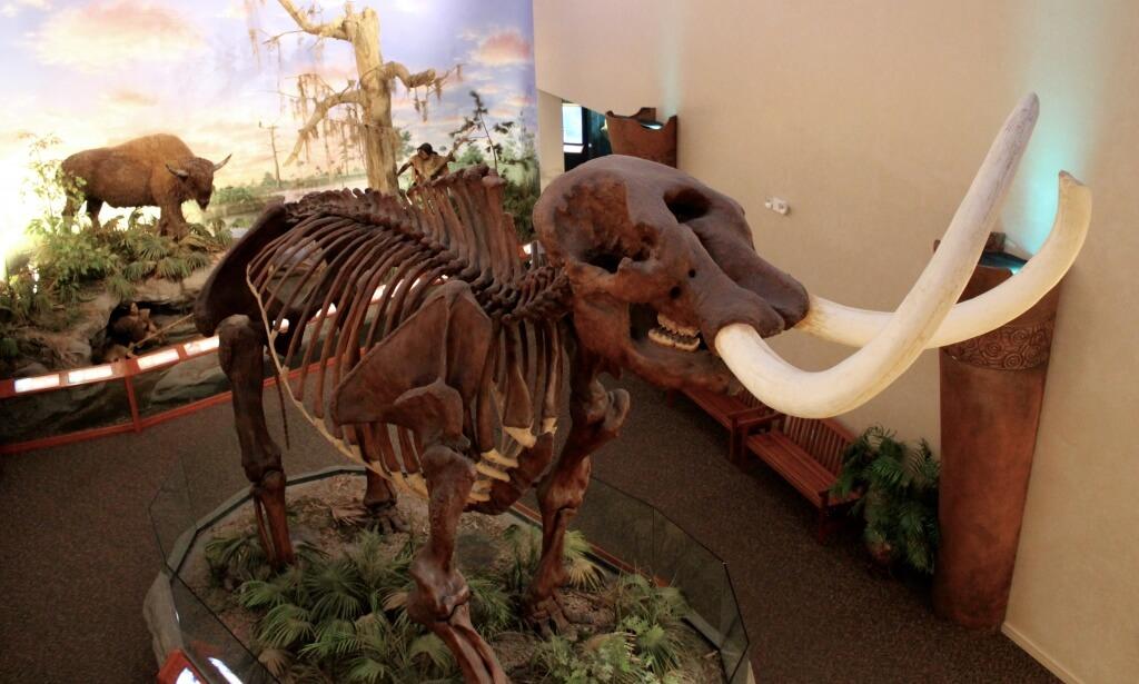 MustDo.com | Mastedon exhibit at South Florida Museum Bradenton, Florida