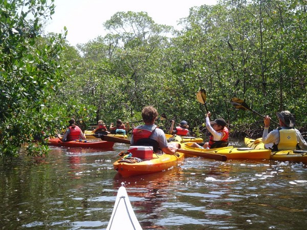 Must Do Visitor Guides, MustDo.com | Naples Kayak Company guided kayak tours Naples, Florida