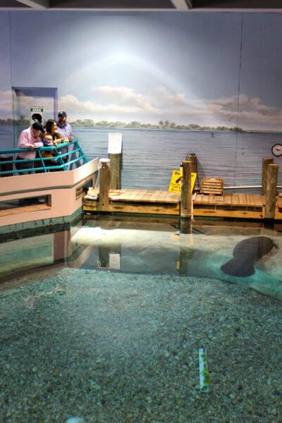 MustDo.com South Florida Museum, Bishop Planetarium and Parker Manatee Aquarium Bradenton, Florida USA. Must Do Visitor Guides