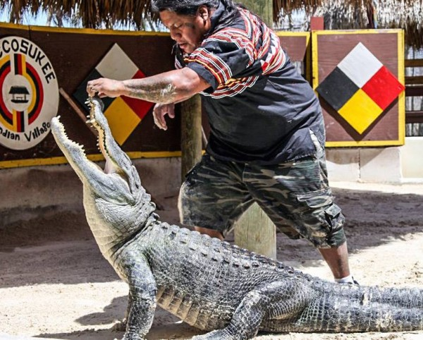 MustDo.com | Miccosukee Indian Village alligator show Everglades, Florida.
