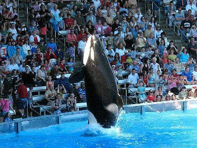 MustDo.com | SeaWorld is a whole park of marine-themed attractions, rides and shows. See dolphins and killer whale Shamu perform at the Believe Show. Aquariums, pools and recreated environments have everything from sharks and seahorses to penguins and beluga whales. Don't miss the excellent shows, including Clyde and Seamore's Comedy Performance with sea lions and otters.