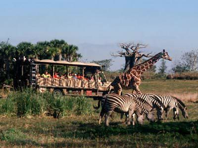 MustDo.com | Disney brings the excitement of an African safari to Orlando with this animal attraction that goes way beyond the usual zoo. Raft down the Amazon, take a runaway train down Mount Everest and enjoy seeing 250 species of animals in a recreated African safari setting.