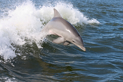MustDo.com | Marco Island Princess cruise Dolphin Sightseeing tours and cruises Marco Island, Florida.