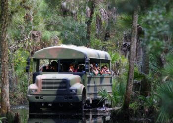MustDo.com | Babcock Wilderness Swamp Buggy wilderness tour north of Fort Myers in Punta Gorda, Florida.