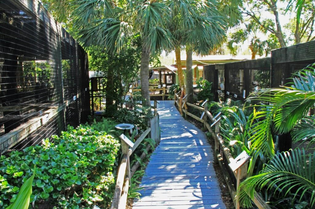 MustDo.com | Peace River Wildlife Center is a non-profit organization caring for injured birds and wildlife. Free to visit, it makes a fun day out in Punta Gorda.