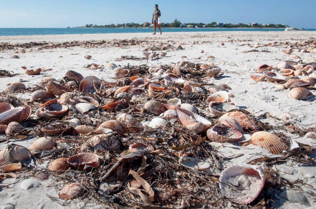Gorda Island Florida