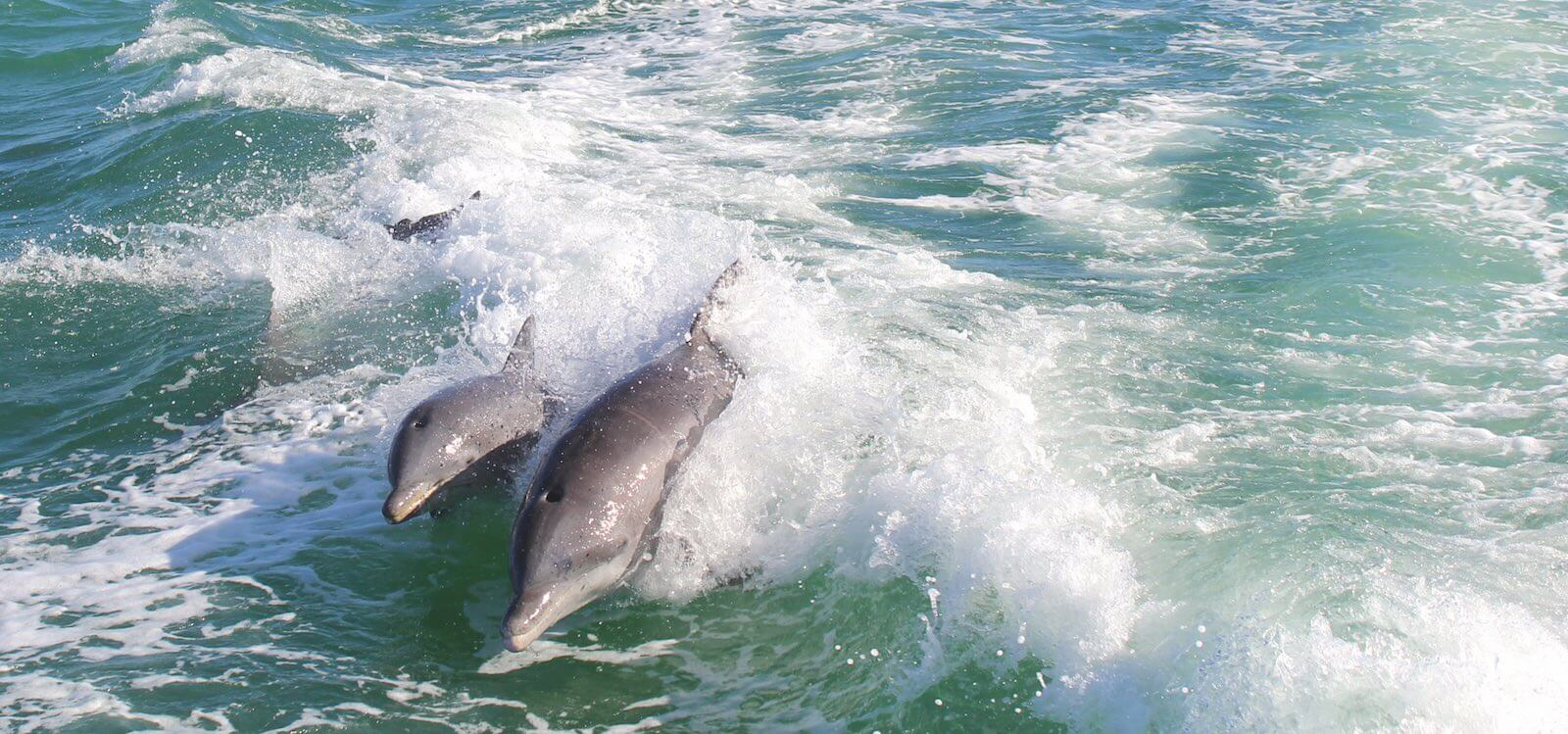 MustDo.com | Family fun dolphin sightseeing cruises Fort Myers, Sanibel and Captiva Island, Florida.