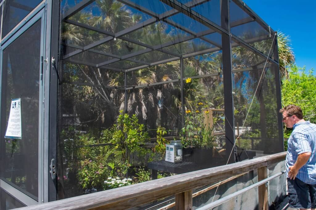 MustDo.com | Butterfly house and native plants at the Sanibel-Captiva Conservation Foundation Sanibel Island, Florida