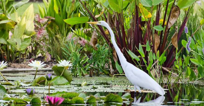 Naples botanical garden discount coupon