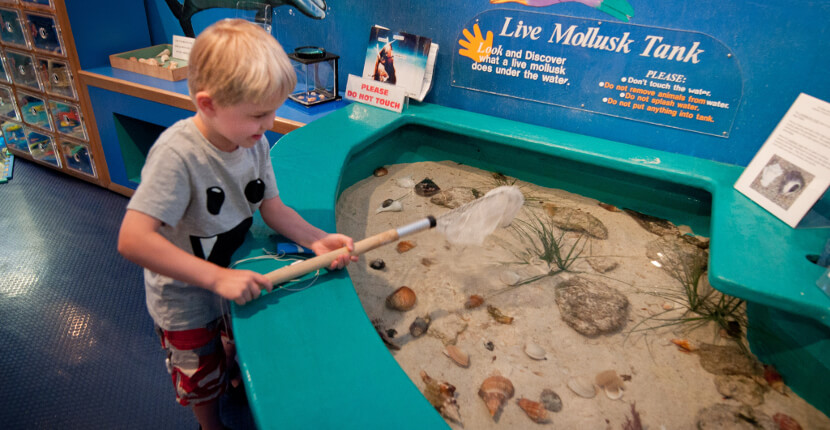 MustDo.com | Bailey Mathews Shell Museum live mollusk tank. Sanibel Island, Florida.